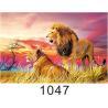 Custom 3D Lenticular Printing 60*80cm / Wall Poster 3D Animals Photos Manufactures
