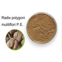 99% Natural Weight Loss Powder Radix Polygoni Multiflori / He Shou Wu Powder Manufactures