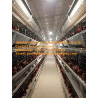 Buy cheap Poultry Chicken Farm Equipment Hot Galvanized Silver H Type Automatic Layer Cage & Chicken Coop System with 84-224 Birds from wholesalers