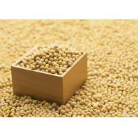 Organic Soybean Extract Powder 40% Isoflavones to improve brain function and dementia Manufactures