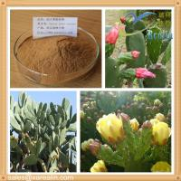 China Natural Cactus Extract Powder Hoodia Extract on sale