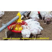 Quality Poultry & Livestock Farm Hot Galvanized Automatic Broiler Chicken Floor Raising System with Nipple Drinking System for sale