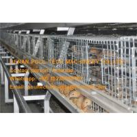 Quality Livestock Farm Hot Galvanized Cage A Type Battery Small Chicken Cage for Chicken for sale