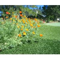 China Aatural apperance artificial turf on sale