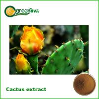 China good news best selling  pure plant lose weight product -Cactus extract powder on sale
