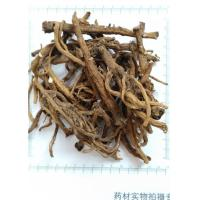 China Dandelion root powder, Taraxacum mongolicum root powder on sale