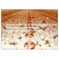 New Poultry Farming Silver Steel Automatic Broiler Chicken Floor Rearing System Manufactures