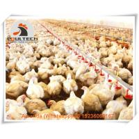 Quality New Poultry Farming Hot Galvanized Broiler Plastic Slatted Floor System & for sale