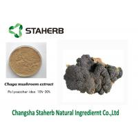 Anti-Tumor Chage extract Male Enhancement Powder Mushroom Extract Powder Manufactures