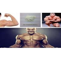 Testosterone Anabolic Steroid Raw Hormone Powder Testosterone Isocaproate CAS 15262-86-9 Manufactures