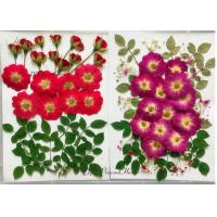 Raw Material Dried Pressed Flowers Eternal Plant For Cell Phone Case Decoration Manufactures