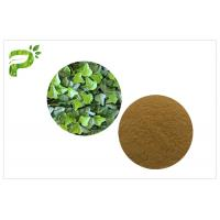 Cough Treat Pure Herbal Supplements Ivy Leaf Extract Hedera Helix Hederacoside 10% Manufactures