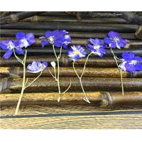 Candle Decoration Dried Flower Art , Larkspur With Stem DIY Pressed Flowers Manufactures