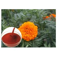 Tagetes Erecta Flower Natural Flower Extracts Powder Preventing Eye Health Manufactures