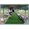 Urban Landscaping Outdoor Artificial Grass Backyard Putting Green 140 S/M Manufactures