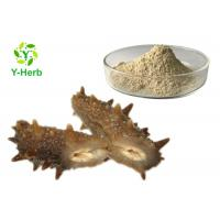 China Sea Cucumber Intestinal Protein Peptide Powder Stichopus Japonicus Extract on sale
