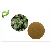 Ivy Leaf Herbal Plant Extract Hedera Helix Hederacoside Promote Blood Circulation For Dietary Supplement Manufactures