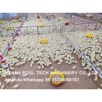 Poultry Farming Raising Chicken Automatic Broiler Ground Rearing System & Broiler Deep Litter System in Chicken House Manufactures