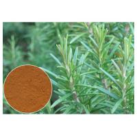 Cosmetic Rosemary Antioxidant Extract , Rosemary Extract Powder CAS 20283 95 5