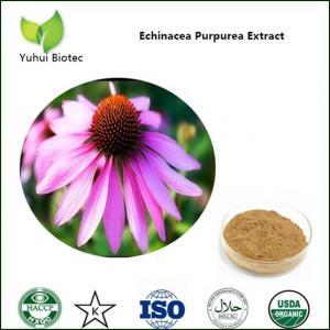 China echinacea purpurea extract in bulk,echinacea root extract,echinacea extract powder on sale