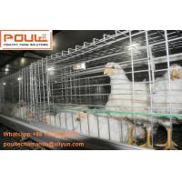 Quality Poultry Farming Steel Sheet Silver Automatic Broiler Chicken Cage  with Feeding&Drinking System for sale