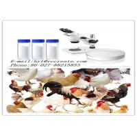 CAS 76639-94-6 Veterinary Drugs 98% Florfenicol White Powder ISO9001 Certification Manufactures