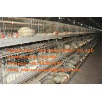 Broiler Farming Galvanized Steel Sheet Silver Automatic Broiler Chicken Cage & Chicken Coop Manufactures