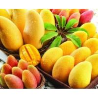 China For beverage instant mango powder drink factory price for juice producing on sale
