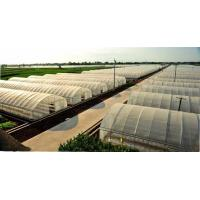 Small Size Single Tunnel Greenhouse Galvanized Tube Frame Span Width 6 / 8 / 10m
