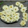 Buy cheap 4003 Juhua Chinese herbal flower tea Florists chrysanthemum flower from wholesalers