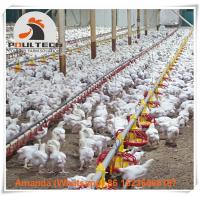 Poultry Farm Raising Chicken  Automatic Broiler Deep Litter System with Automatic Feeding Pan & Nipple Drinking System Manufactures