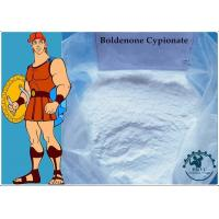 99% Body-building Muscle Growth Boldenone Cypionate CAS:106505-90-2 White Powder Manufactures