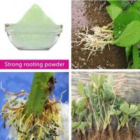China Agrochemical promote rooting powder plant hormone strong rooting powder 98%TC on sale
