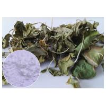 Gotu Kola Leaf Centella Asiatica Extract Powder Oxidation Resistance Manufactures