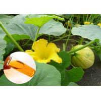 Food Grade Natural Plant Extract Oil Cold Pressed Pumpkin Oil Prostate Protection Manufactures