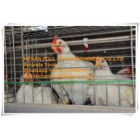 Quality Livestock Farming Steel Sheet Silver Automatic Broiler Chicken Cage  with Feeding&Drinking System for sale
