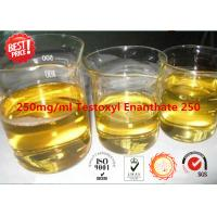 Testoxyl Enanthate Legal Injectable Steroids 250 Testosterone Enanthate 250mg/Ml Manufactures
