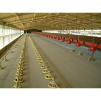 Poultry automatic drinker for broilers and layers Manufactures