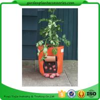 Outdoor Garden Plant Accessories , Classic Line Tequila Sunrise Fabric Planter garden bags Manufactures