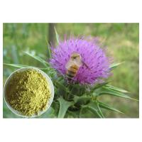 Silymarin Herbal Plant Extract Milk Thistle Powder From Seed Light Yellow Anti - Cancer Manufactures