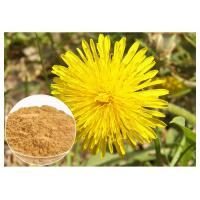 China Anti Cancer Dandelion Root Powder Natural Extraction Improving Liver Function on sale