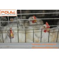 Poultry Equipment Steel Sheet Silver Automatic Broiler Chicken Cage  System with Feeding&Drinking System Manufactures