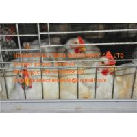 Quality Broiler Farming Galvanized Steel Sheet Silver Battery  Broiler Chicken Cage & Chicken Coop for Chicken House for sale