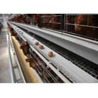 Low Price Layer Chicken Cage with Full Set Automatic Poultry Equipments A Type Cage