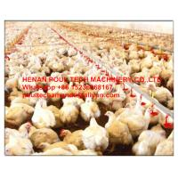 Poultry & Livestock Farming Silver Steel Automatic Broiler Chicken Floor Rearing System Manufactures