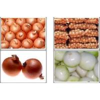 Fresh Yellow Onion Manufactures
