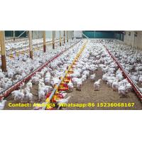 Quality Poultry Farm Hot Galvanized Nipple Drinker & Feeding System for Broiler Chicken Floor Raising System in Chicken House for sale