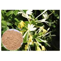 Anti Bacterial Natural Flower Extracts Chlorogenic Acid 5% Honeysuckle Flower Extract Powder Manufactures