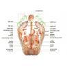 Tourmaline Heart Shiatsu Foot Massager For Acupuncture Points , Reflexology Manufactures