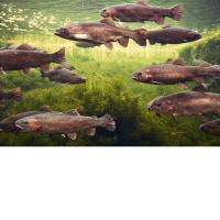 China 3D Lenticular Picture/Image / Trout C/ 3D Lenticular Printing on sale